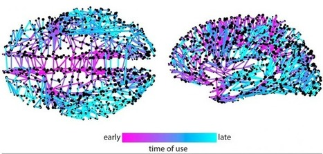 Network model for tracking Twitter memes sheds light on information spreading in the brain | CASR3PM | Scoop.it
