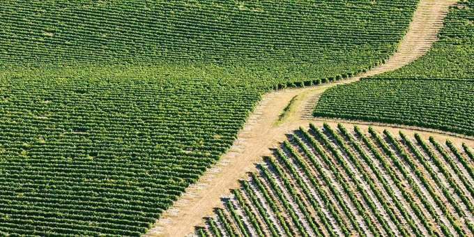 L'Assemblée décale de trois ans l'interdiction de la production de certains pesticides