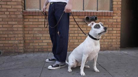 En Iran, avoir un chien pourrait bientôt être puni de 74 coups de fouet | CaniCatNews-actualité | Scoop.it
