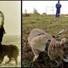 Animales como instrumentos de guerra