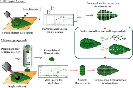 Mass spectrometry imaging for plant biology: a review | Plant Genetics, NGS and Bioinformatics | Scoop.it