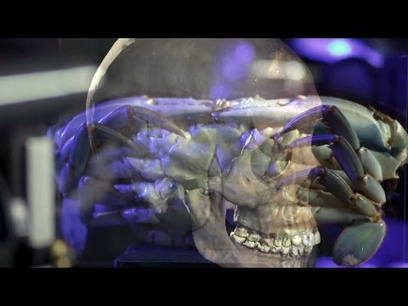 How the Smithsonian is 3D-Scanning Its Entire Collection | Clever stuff | Scoop.it