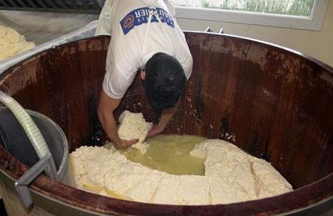 Comment est fabriqué le Cantal | The Voice of Cheese | Scoop.it