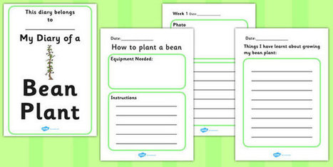 My Diary of a Bean Plant Booklet Template | Des