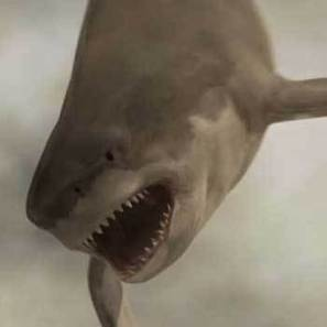 'Most social TV movie ever': Syfy estimates 'Sharknado 2′ delivers ... | screen seriality | Scoop.it