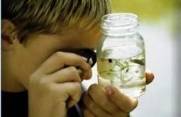 El aprendizaje con sentido | Aprender a Pensar | Las TIC y la Educación | Scoop.it