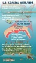 U.S. losing 80,000 acres of wetlands in coastal watersheds per year -- equal to 7 football fields per hour | Real Estate Topics | Scoop.it