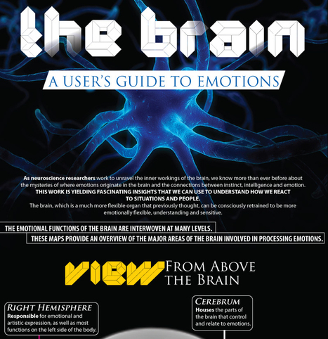 The Brain | Picturing It | Scoop.it