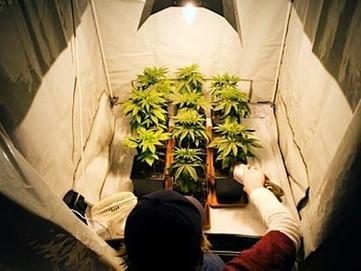 Commissioners favor indoor medical marijuana farming in Elk Grove California — City Farmer News | Local Economy in Action | Scoop.it