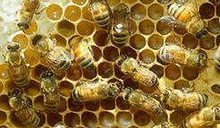 Welcome to BugGuide.Net! - BugGuide.Net | Garden Libraries | Scoop.it