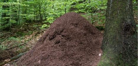 On a découvert l'enfer des fourmis : un bunker atomique désaffecté en Pologne | Confidences Canopéennes | Scoop.it