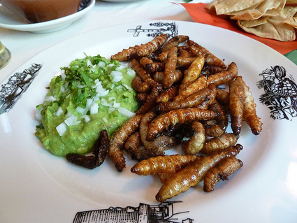 Eating Bugs To Survive: 30 Bugs You Can Eat In An Emergency ...   eating insects = win   Scoop.it