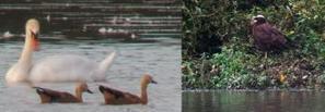 Saint-Nicolas-de-la-Grave. 4 000 oiseaux recensés sur le plan d'eau | Touche pas ma planète ! | Scoop.it