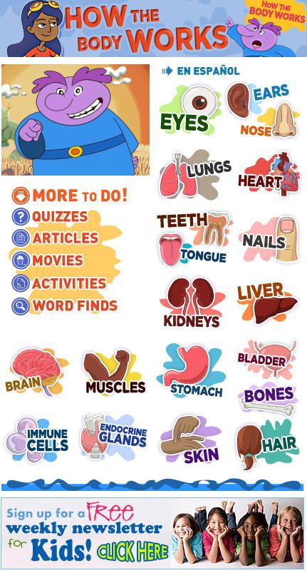 How the Body Works | KB...Konnected's  Kaleidoscope of  Wonderful Websites! | Scoop.it