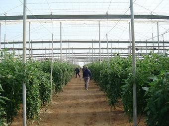 Interés en reducir la contaminación debido a los ineficaces sistemas en utilizar fertilizante | Cultivos Hidropónicos | Scoop.it