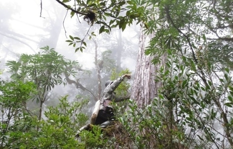Global count reaches 3 trillion trees | #People | Scoop.it
