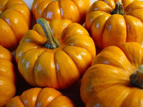 Holiday History - Pumpkin Pie | TEFL & Ed Tech | Scoop.it