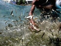 Sécurité alimentaire dans les pays pauvres: le rôle de l'aquaculture - Fasozine.com   Actualité du monde associatif, du bénévolat, des ONG, et de l'Equateur   Scoop.it