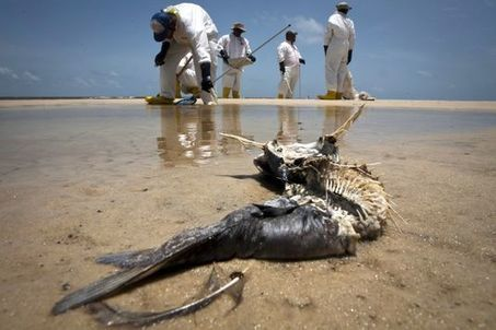 En Louisiane, la mystérieuse maladie de la marée noire | Totalmente Natura | Scoop.it