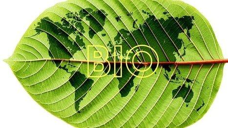 L'agriculture bio dans le monde pourrait nourrir toute la population ! Une étude le démontre. | Des 4 coins du monde | Scoop.it