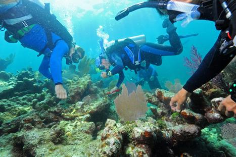Divers volunteer to revitalize the coral reef - The Boston Globe | Remi Vee - Social Media | Scoop.it