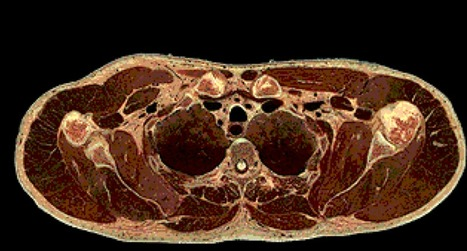 This cool GIF shows the inside of the human body from head to toe | SMART INNOVATIONS | Scoop.it