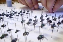 Entomología forense: la interesante disciplina que potencia la investigación médico legal | Bichos en Clase | Scoop.it