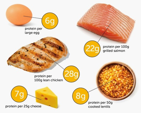 Muscle-Friendly Protein Foods | Useful Fitness Articles | Scoop.it
