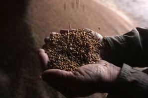 CIMMYT's Bram Govaerts Receives 2014 Norman Borlaug Award for Field Research and Application | EGFAR | Piccolo Mondo | Scoop.it