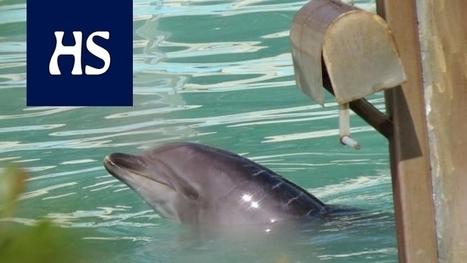 seksiä delfiini video