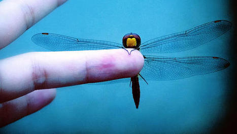 Watch This Ultralight, 3-D-Printed Ornithopter Flap Around Like A Dragonfly   Emerging Media Topics   Scoop.it
