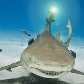 Real Freaking Lasers on Actual Real Freaking Sharks!! >:D | total nonsense, everything i like | Scoop.it