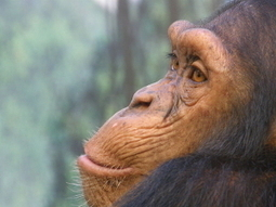 Wildlife News Roundup (June 22-28, 2013) | Corinne | Scoop.it