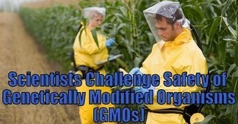 More than 230 scientists say GMOs not safe, including developer of first GM crop | Healthy Recipes and Tips for Healthy Living | Scoop.it
