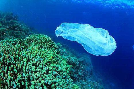 Pourquoi il est nécessaire de supprimer les sacs plastiques ?   Intervalles   Scoop.it
