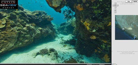 SeaView Underwater Virtual Tour Project | Animal Webcams | Scoop.it