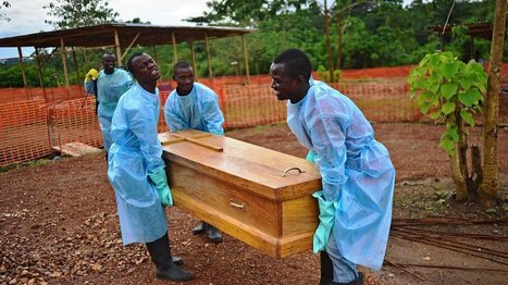 Scientists found the origins of the Ebola outbreak — by tracking its mutations | Viruses and Bioinformatics from Virology.uvic.ca | Scoop.it