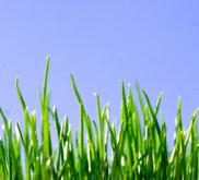 Ranking de las 10 empresas más sostenibles del mundo, según WWF | La R-Evolución de ARMAK | Scoop.it
