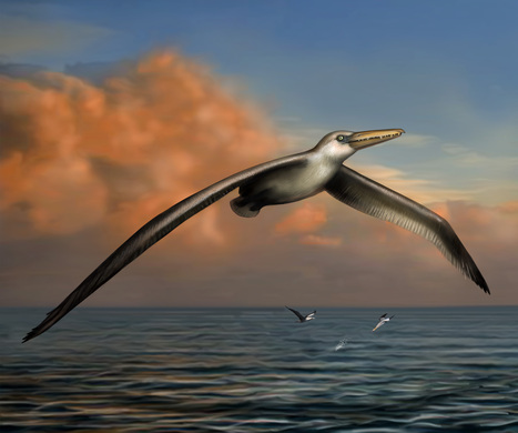 This Ancient Bird Had the Largest Wingspan Ever | Geology | Scoop.it