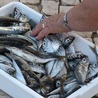 Commercial fishing - legal issues