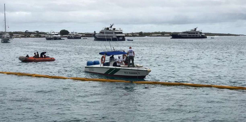 Pieuvre In La Mer Et Lhomme Scoopit