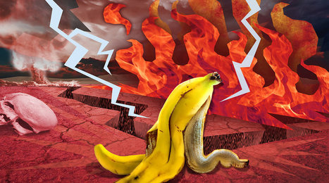 How GMOs Offer Unexpected Salvation from a Potential Banana Apocalypse | Biotech | Scoop.it