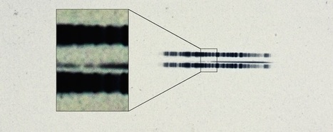 1917 astronomical plate has first-ever evidence of exoplanetary system | Amazing Science | Scoop.it