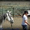 Combating injury in horses