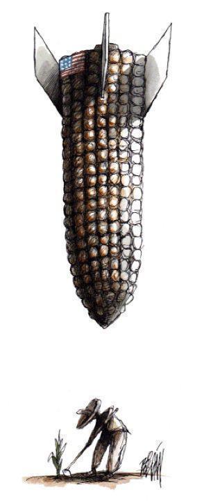 Course contre-la-montre pour éviter des champs de maïs OGM en France | Abeilles, intoxications et informations | Scoop.it