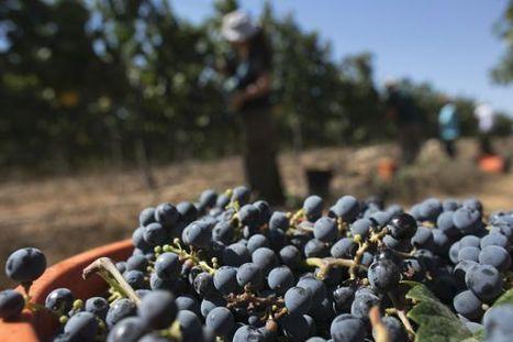 Vendanges 2012 : moins de vin mais de meilleure qualité - Le Figaro | Parlez vin! | Scoop.it