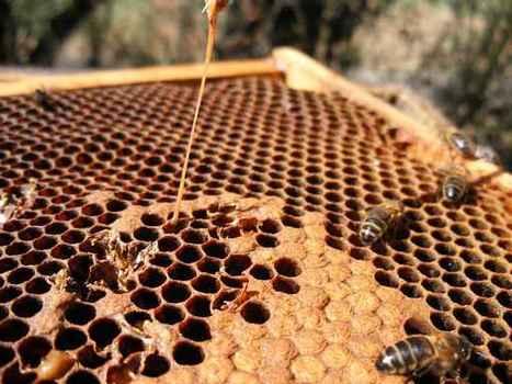 Le combat des apiculteurs contre les maladies - TAHITI INFOS (Inscription) | Abeilles, intoxications et informations | Scoop.it