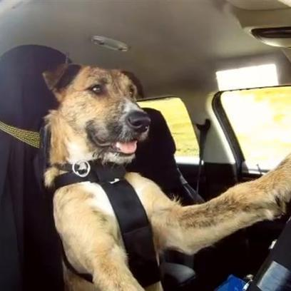 World's First Driving Dog Goes Viral | You Can't Make This Stuff Up | Scoop.it