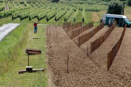 Droits de plantation : Des prix en baisse | Viticulture | Scoop.it