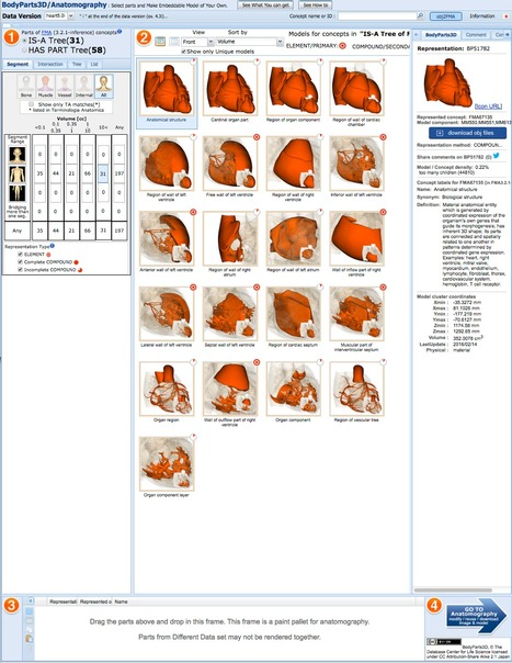 BodyParts3D/Anatomography Database | bioinformatics-databases | Scoop.it